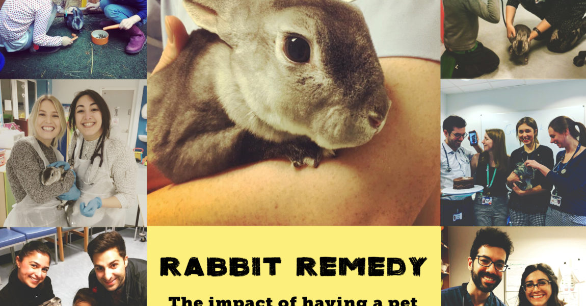 Rabbit Remedy: the impact of having a pet rabbit on a paediatric inpatient unit